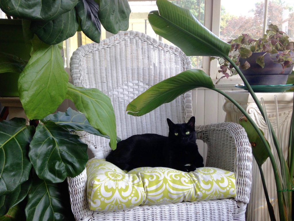 Cats and plants || leafandpaw.com