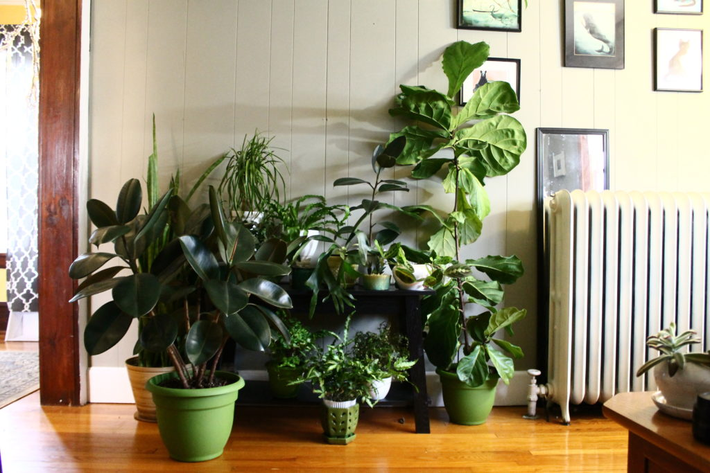 The best light for indoor plants.