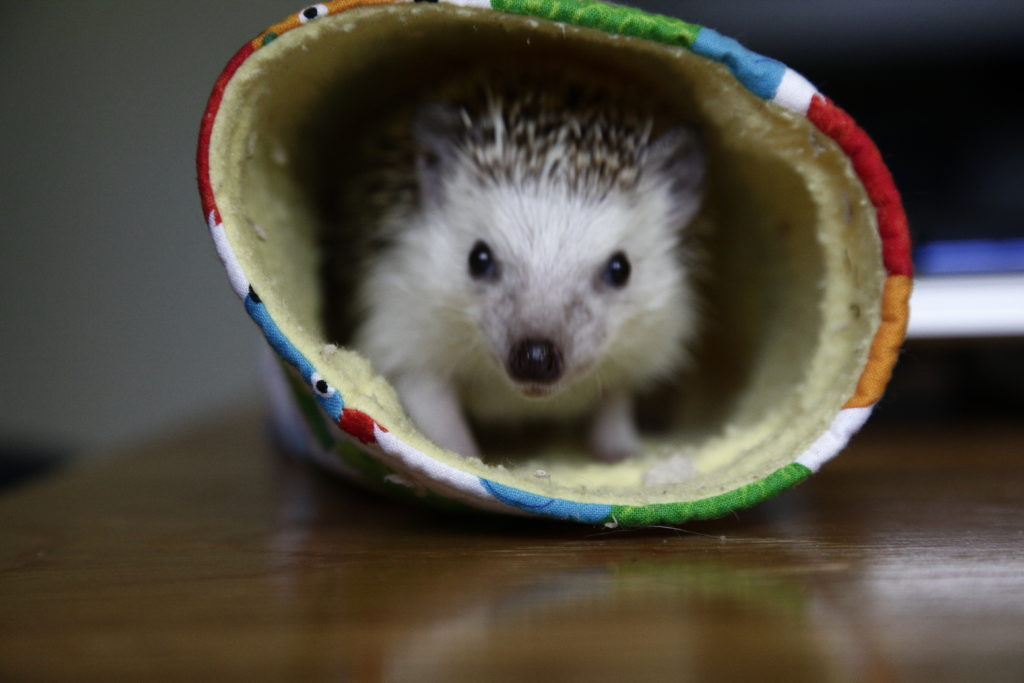 Simon the Hedgehog