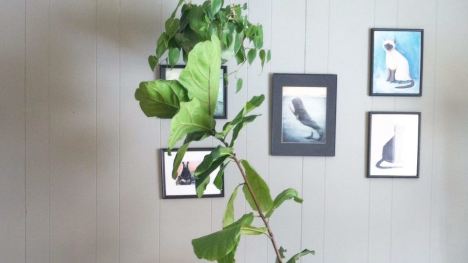 Finding Light for Your Indoor Plants