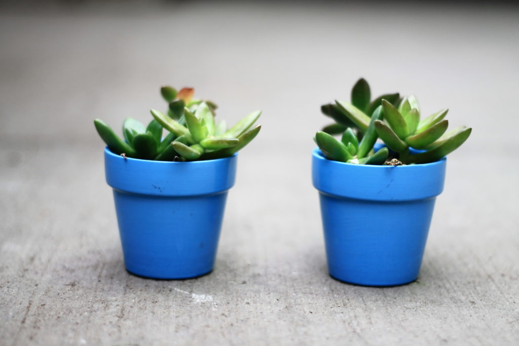 Succulents: Pet Safe Houseplants