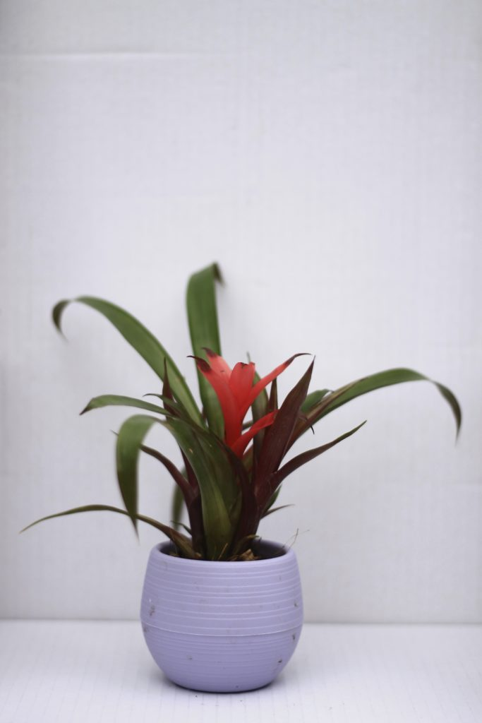 Five Minimalist Pet Safe Houseplants