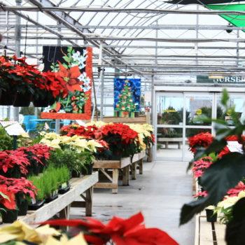 How to get free indoor plants