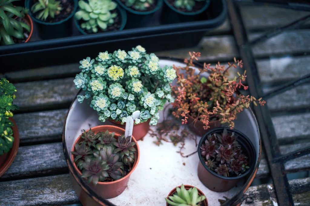 Free plants at a plant swap