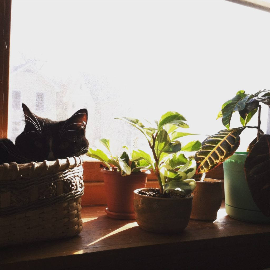 Cats and plants sunbathing.