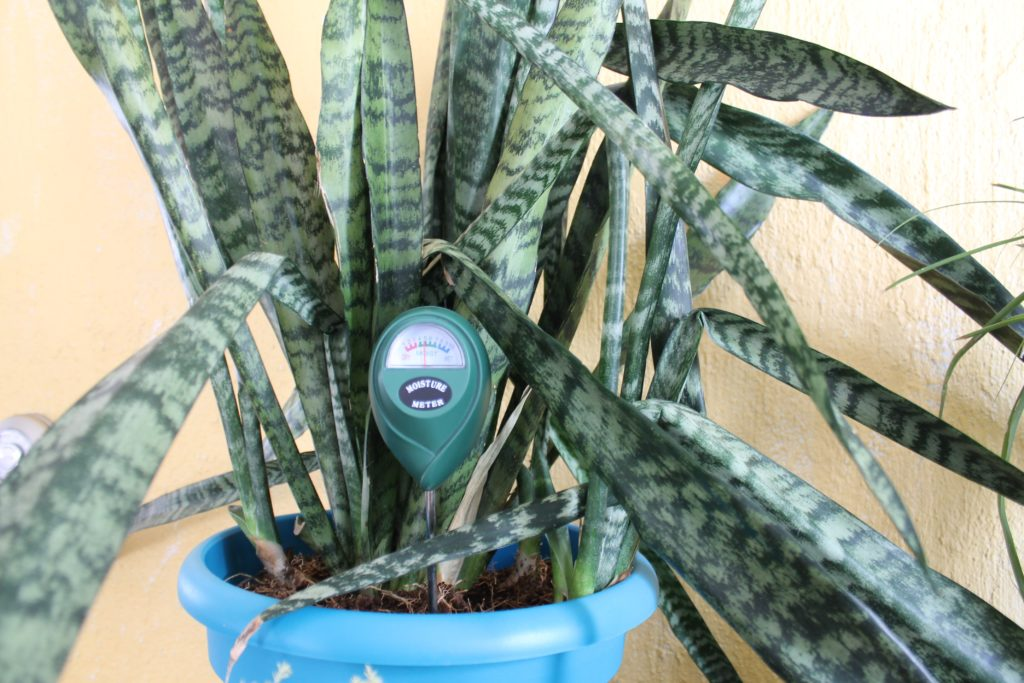Pests: What to Look for on Indoor Plants