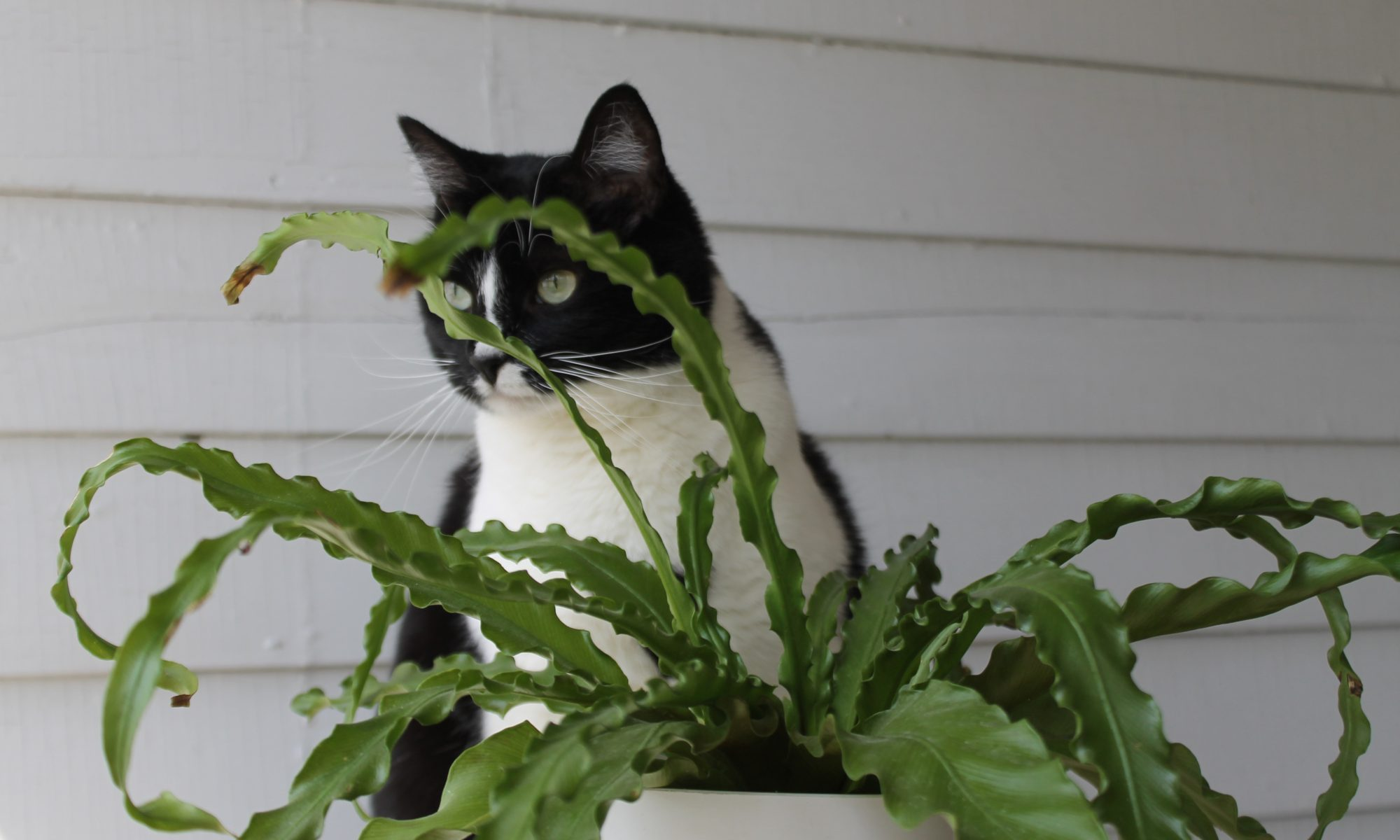 Pet Safe Houseplants