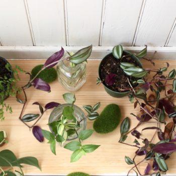 Urban Jungle Bloggers : Leaf and Paw