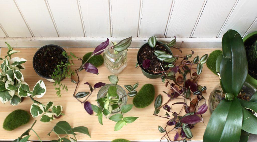 New Beginnings: Prep Plants for Spring