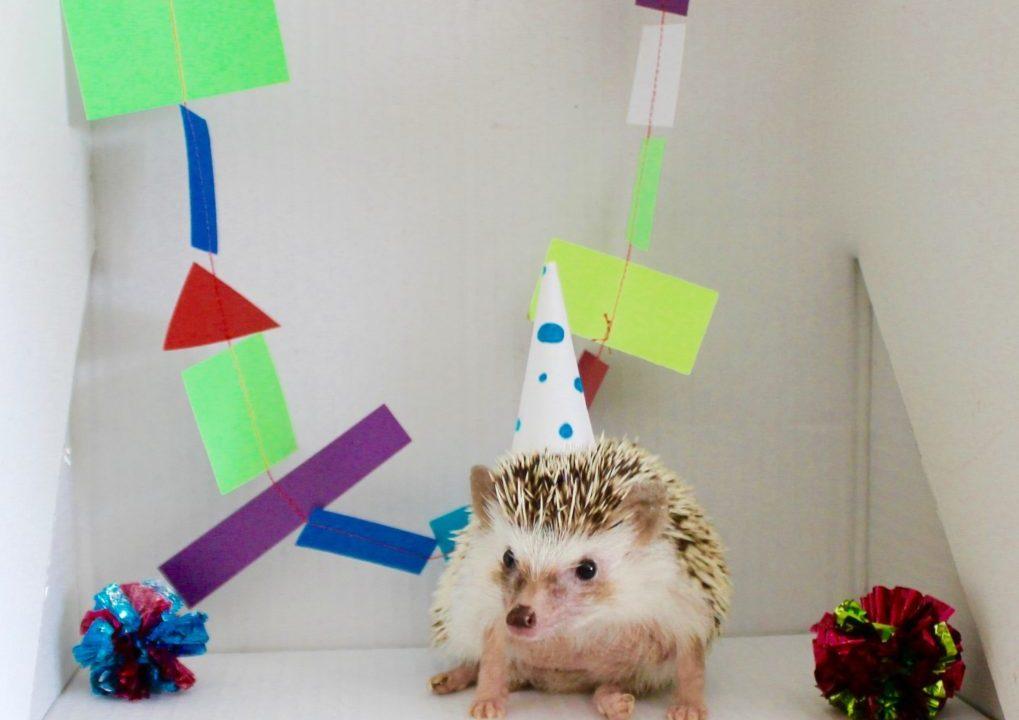 Henrietta the Hedgehog