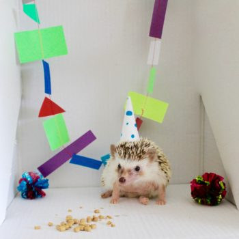 Hedgehog birthday party hat