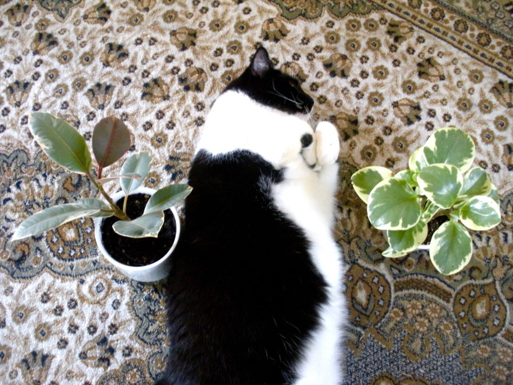 Cats and Plants