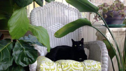 A Tropicool Cat Oasis 🌴🌞