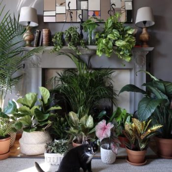 Pet Friendly Plants Archives | Leaf and Paw