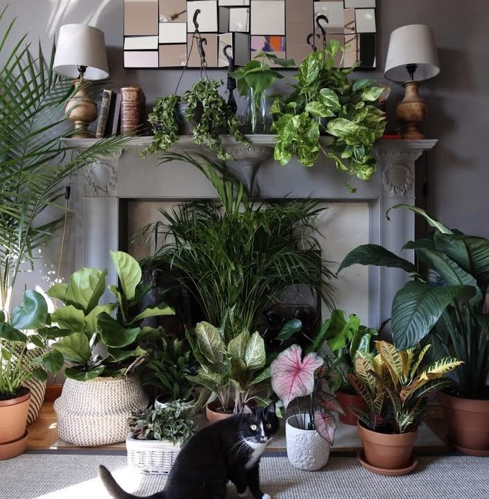 The Instagram Plant+Pet Fan Club