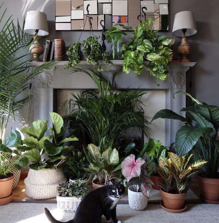 The Instagram Plant+Pet Fan Club
