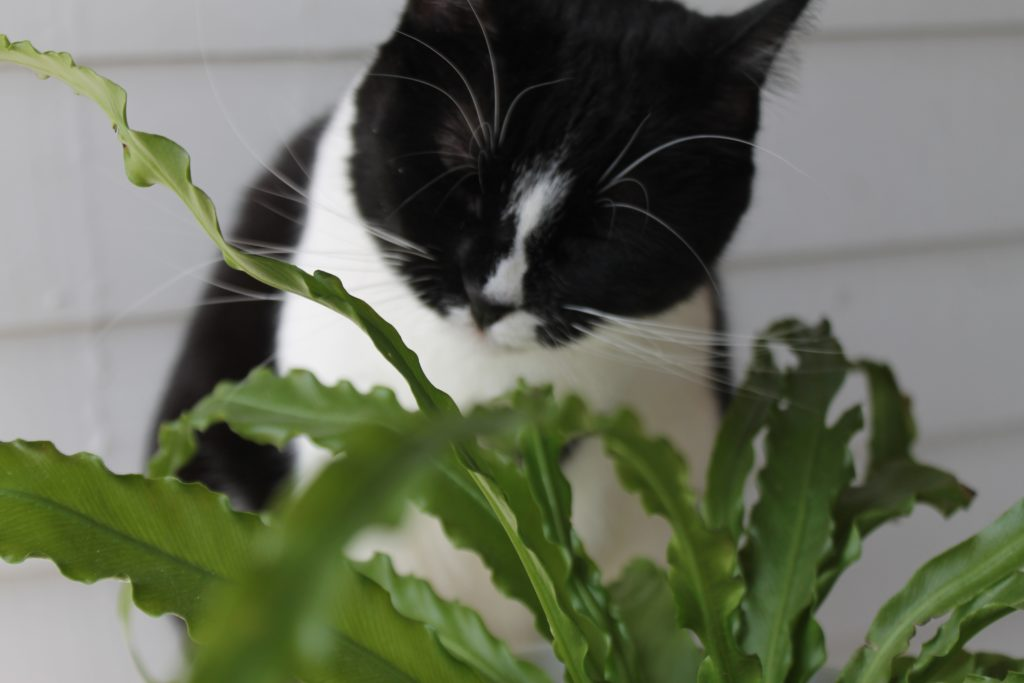 Pet Safe Herbs