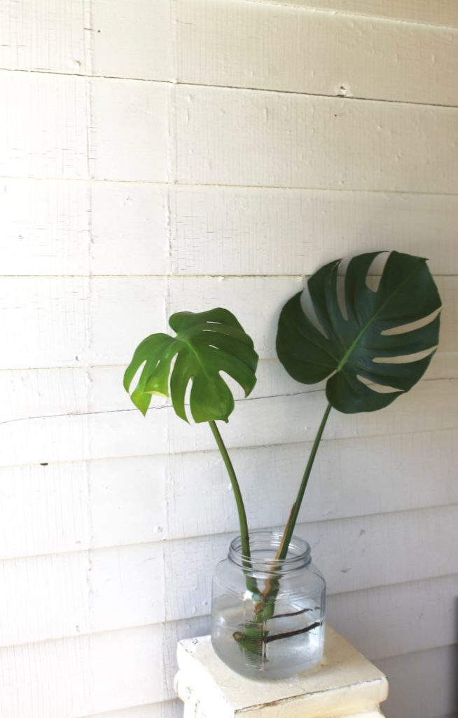 How to Propagate a Monstera Deliciosa