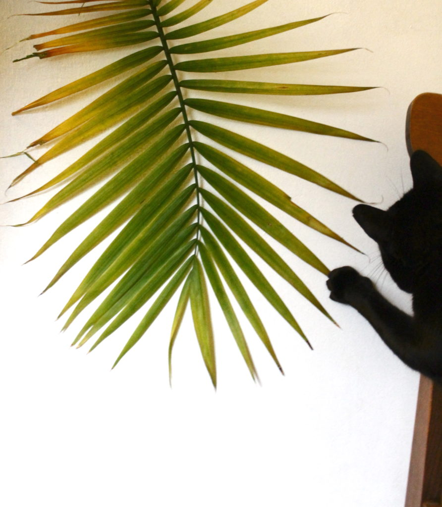 Palm tree and cat :: leafandpaw