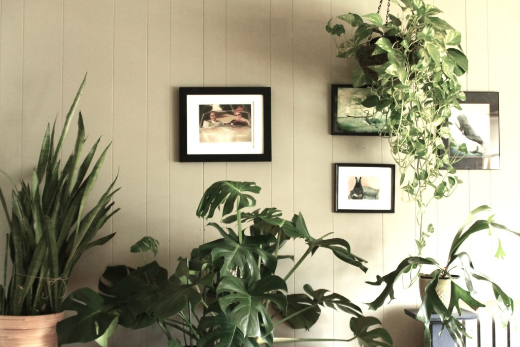 Indoor Plant Collection ::leafandpaw