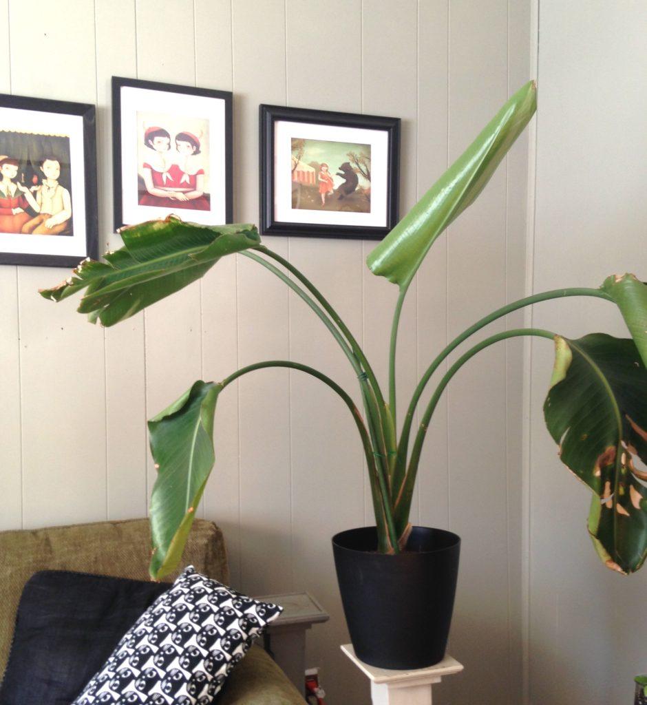 Minimal Planter : LeafandPaw