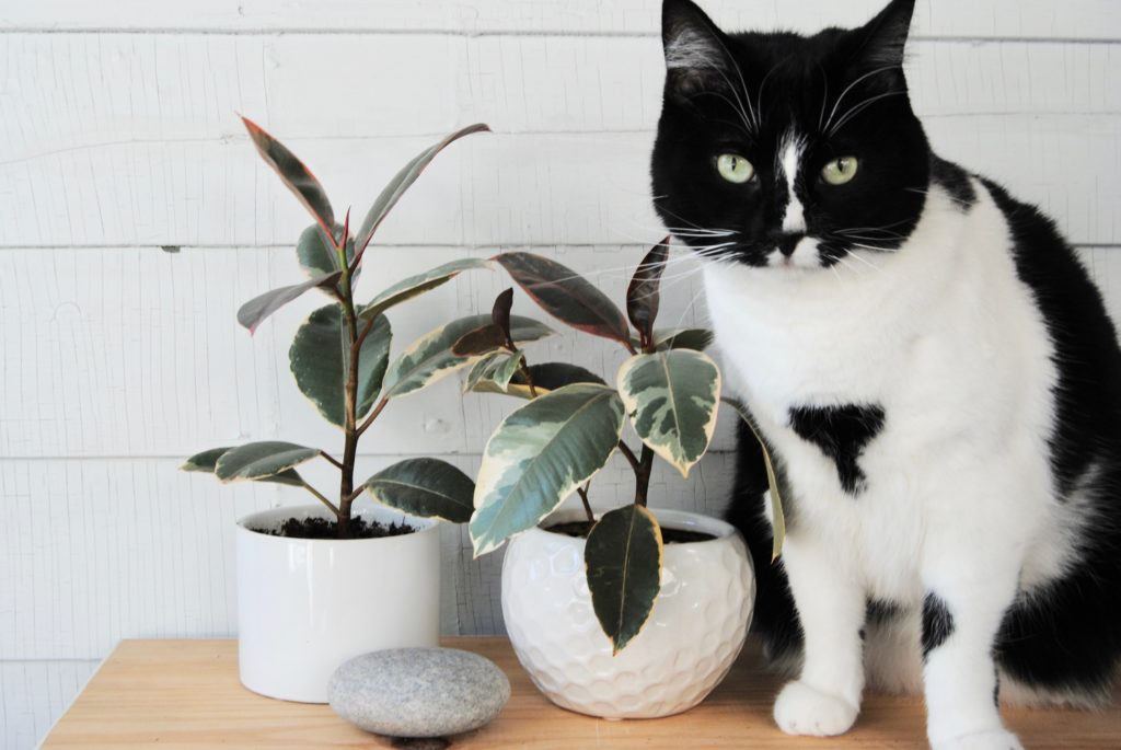 Why are some plants poisonous to pets?