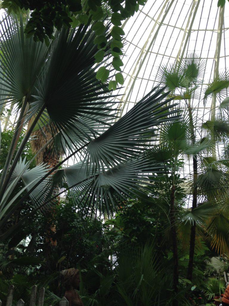 Pet Safe Plants :: Palms. Leafandpaw.com