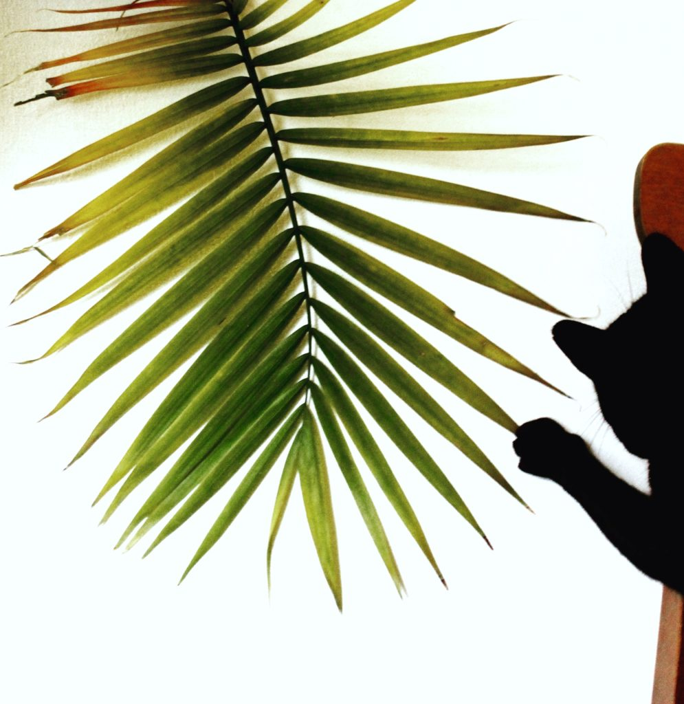 Pet Safe Plants - Palms
