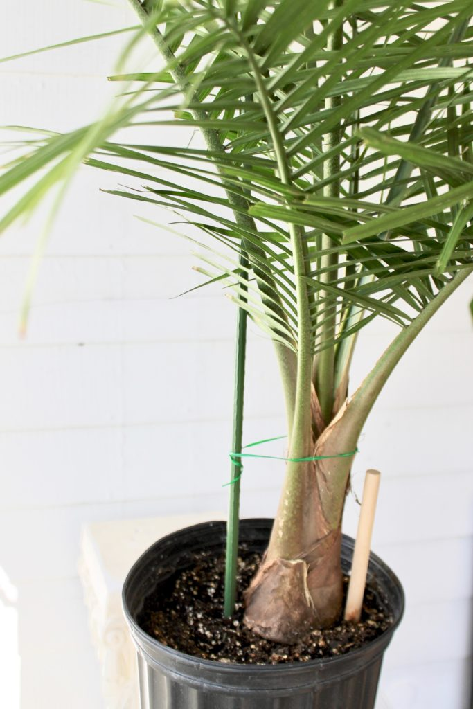 Palms :: Leafandpaw.com