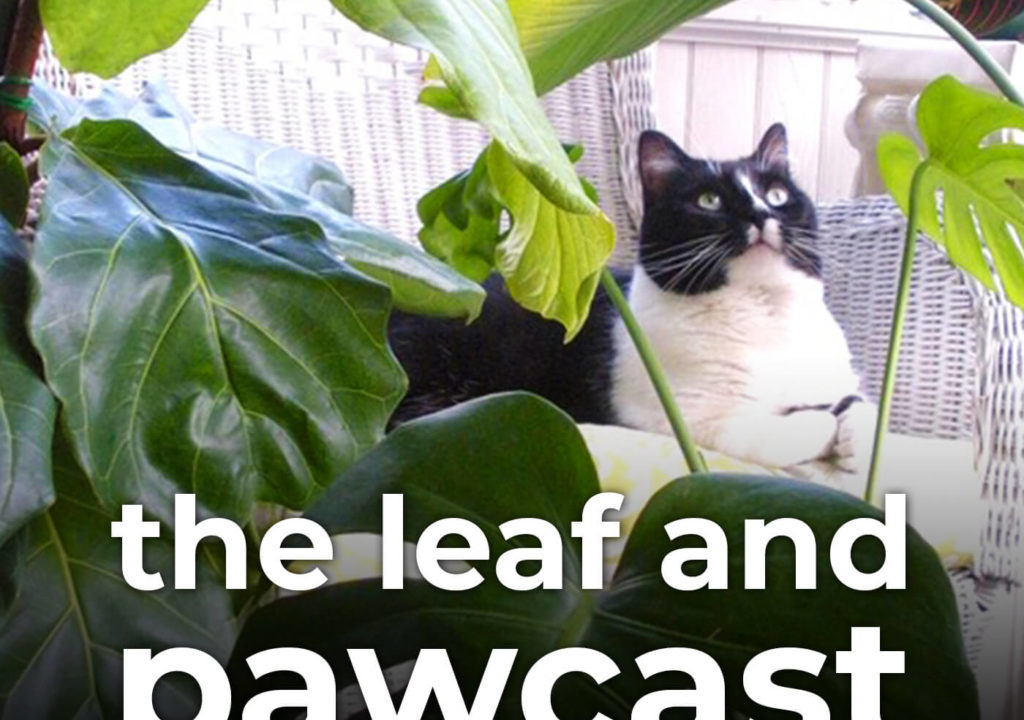 Podcast: The Leaf and Pawcast