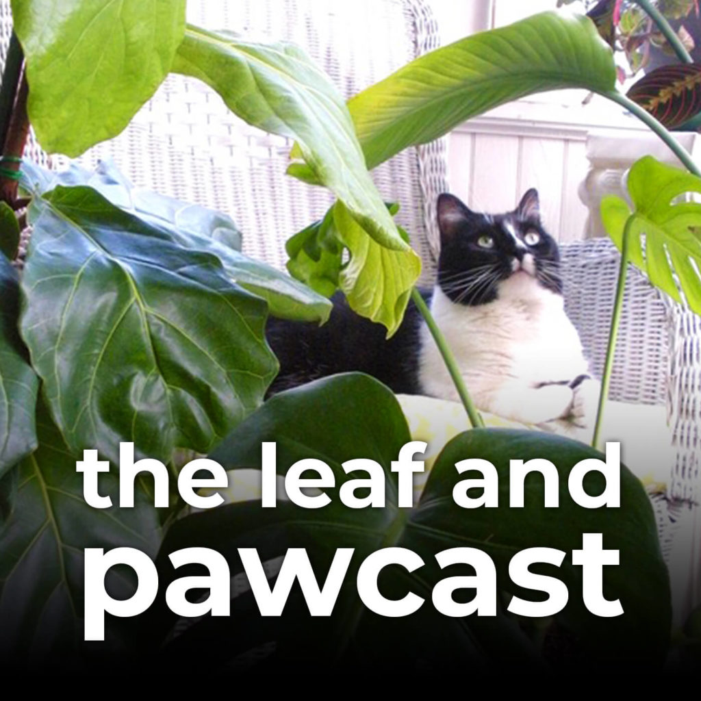 indoor plant podcast
