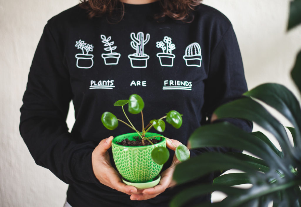"""small pilea peperomioides """" leaf and paw"""