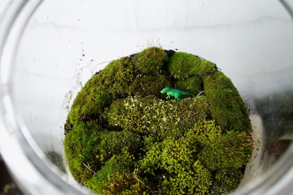 DIY: A (Free) Moss Terrarium