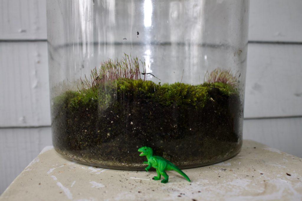 DIY (free) Moss Terrarium