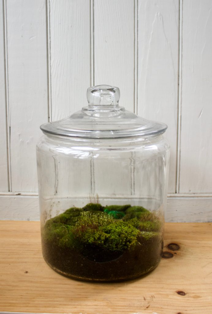 DIY Terrarium in Vintage Jar