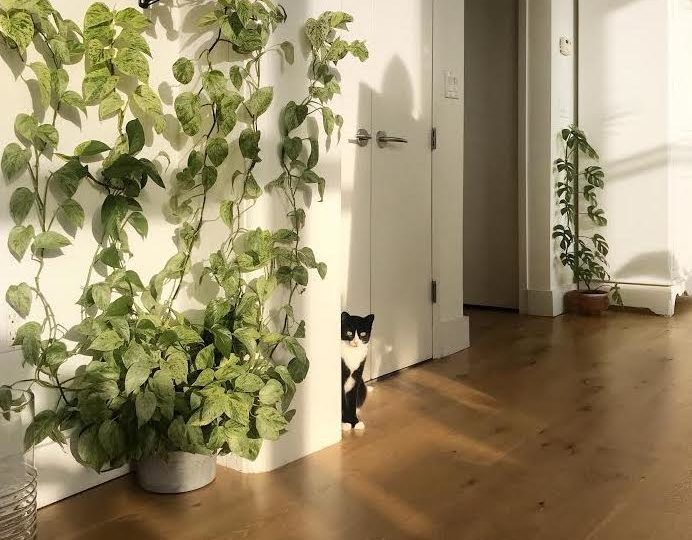 Climbing Plants Safe for Pets