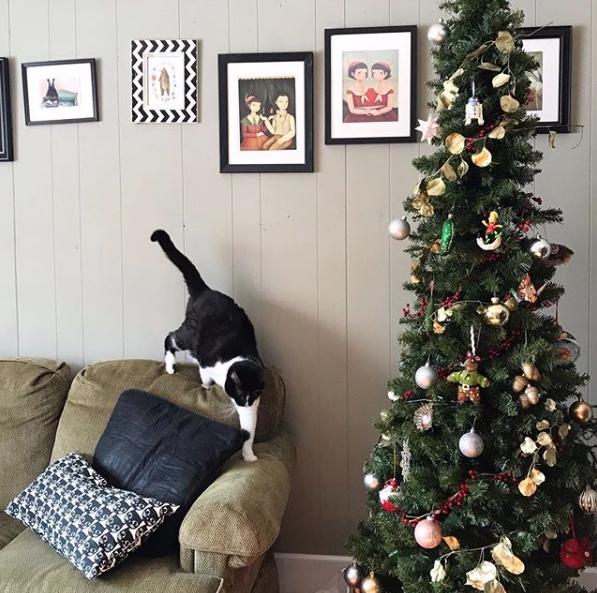 Pet Safe Holiday Plants