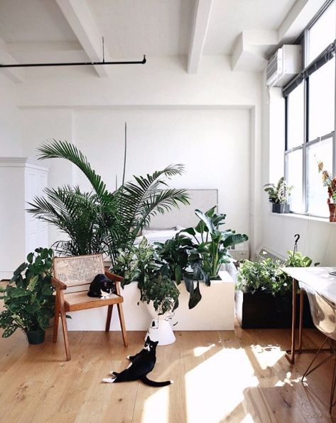 Indoor trees and plants