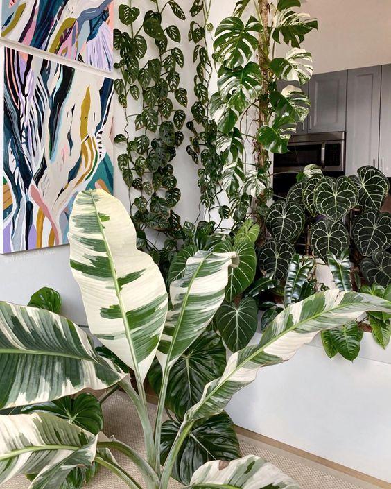 Rare variegated plants