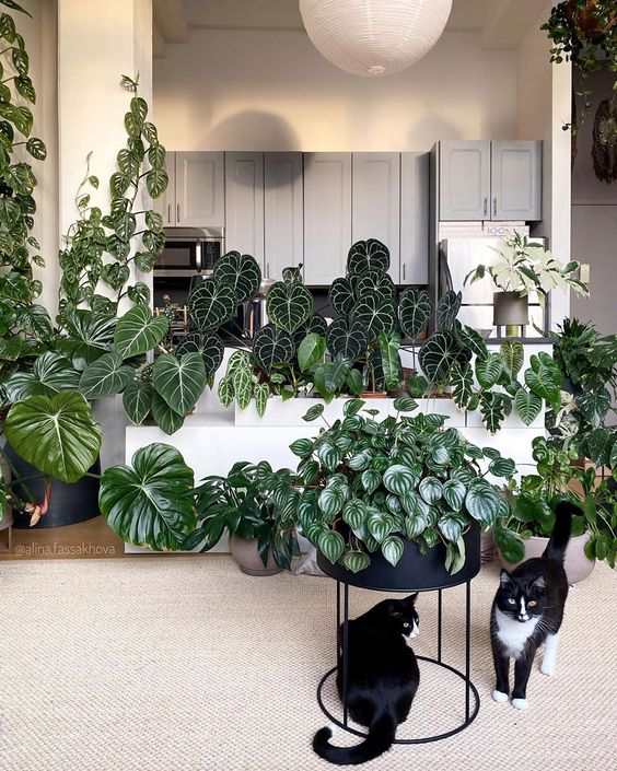 Rare houseplants