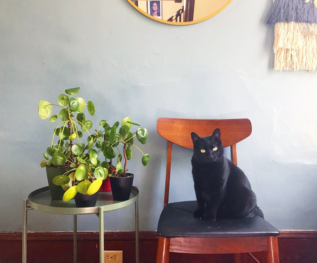 Cat and pilea peperomioides : leaf and paw