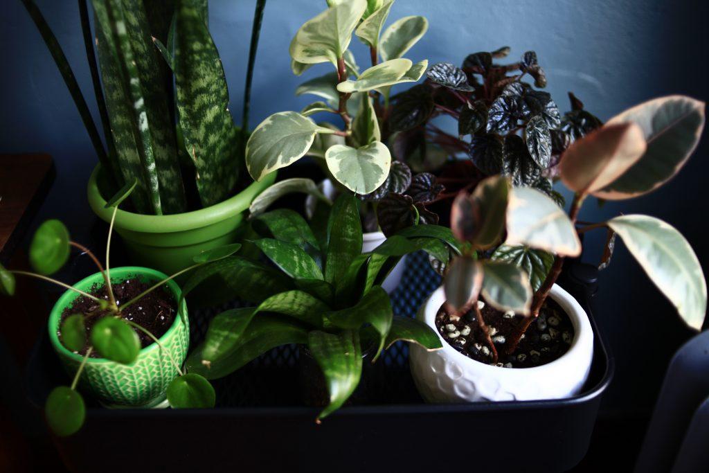 Plant arrangement on cart