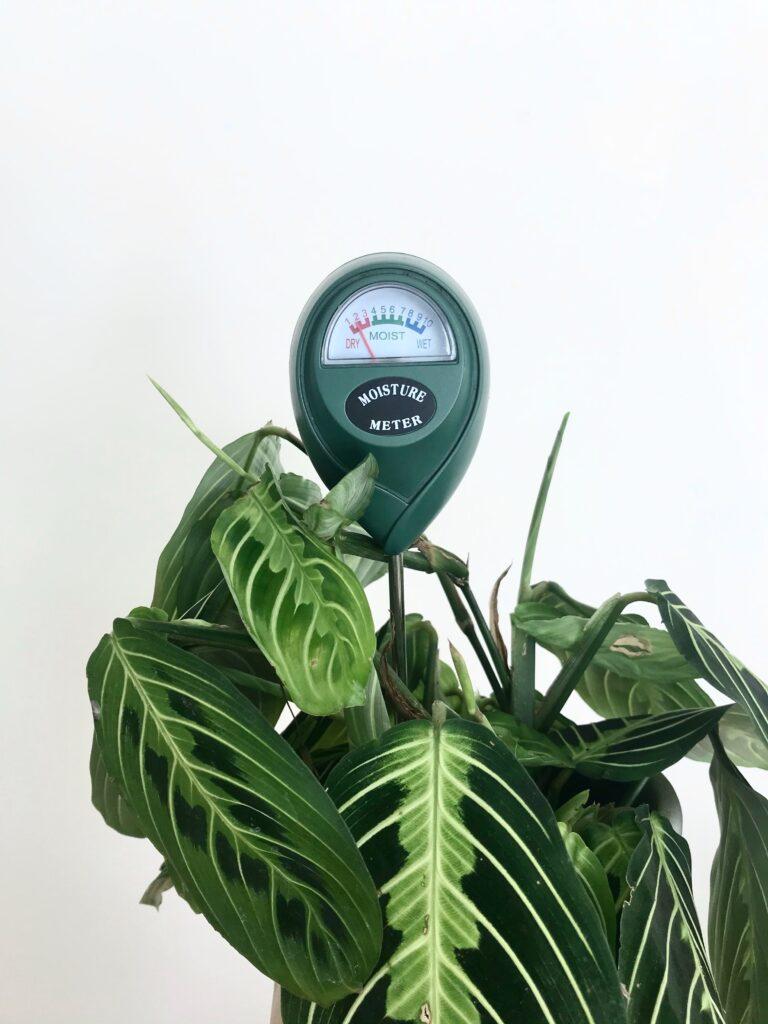 moisture meter levels